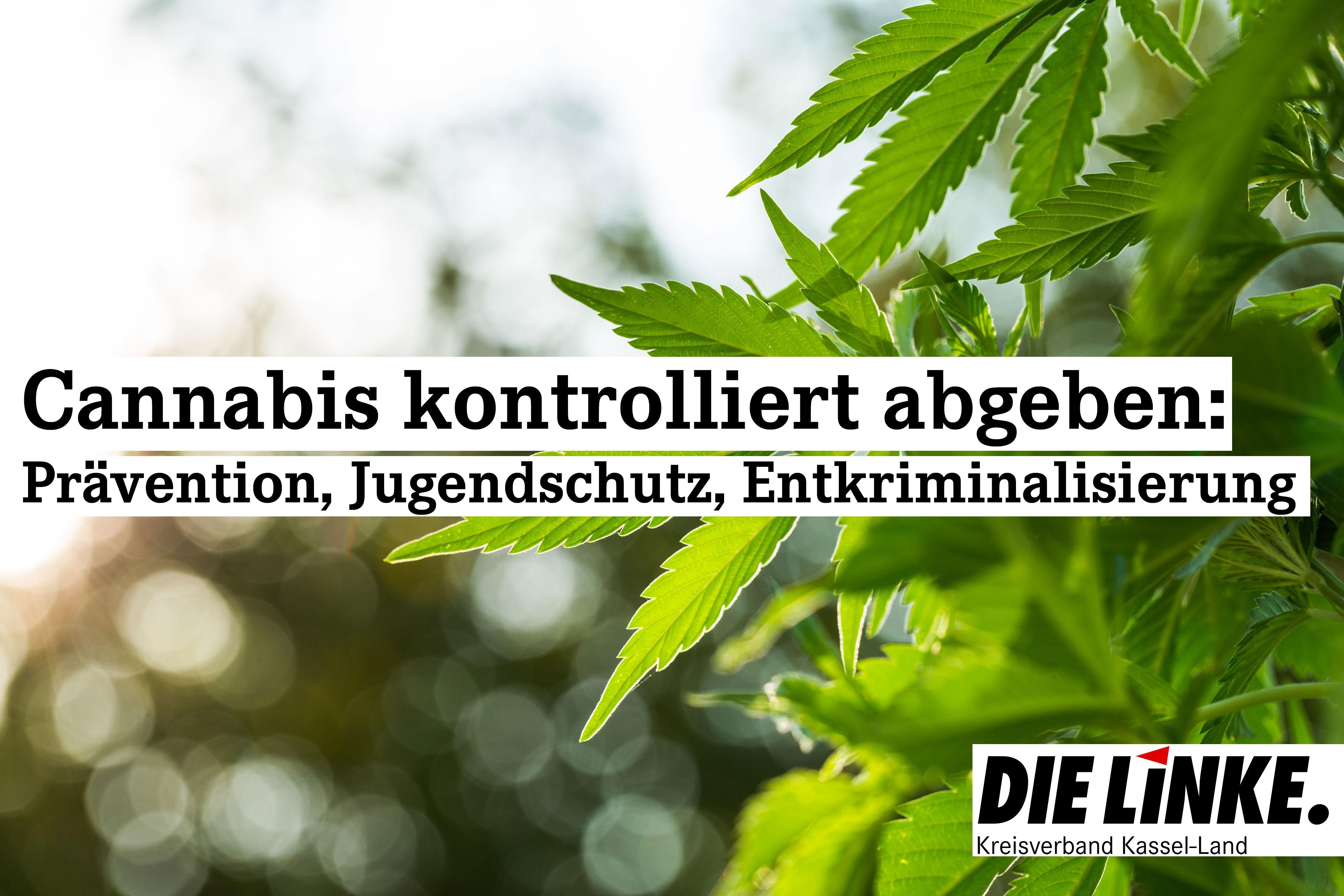 Cannabis – Legalisierung und Regulierung statt Kriminalisierung