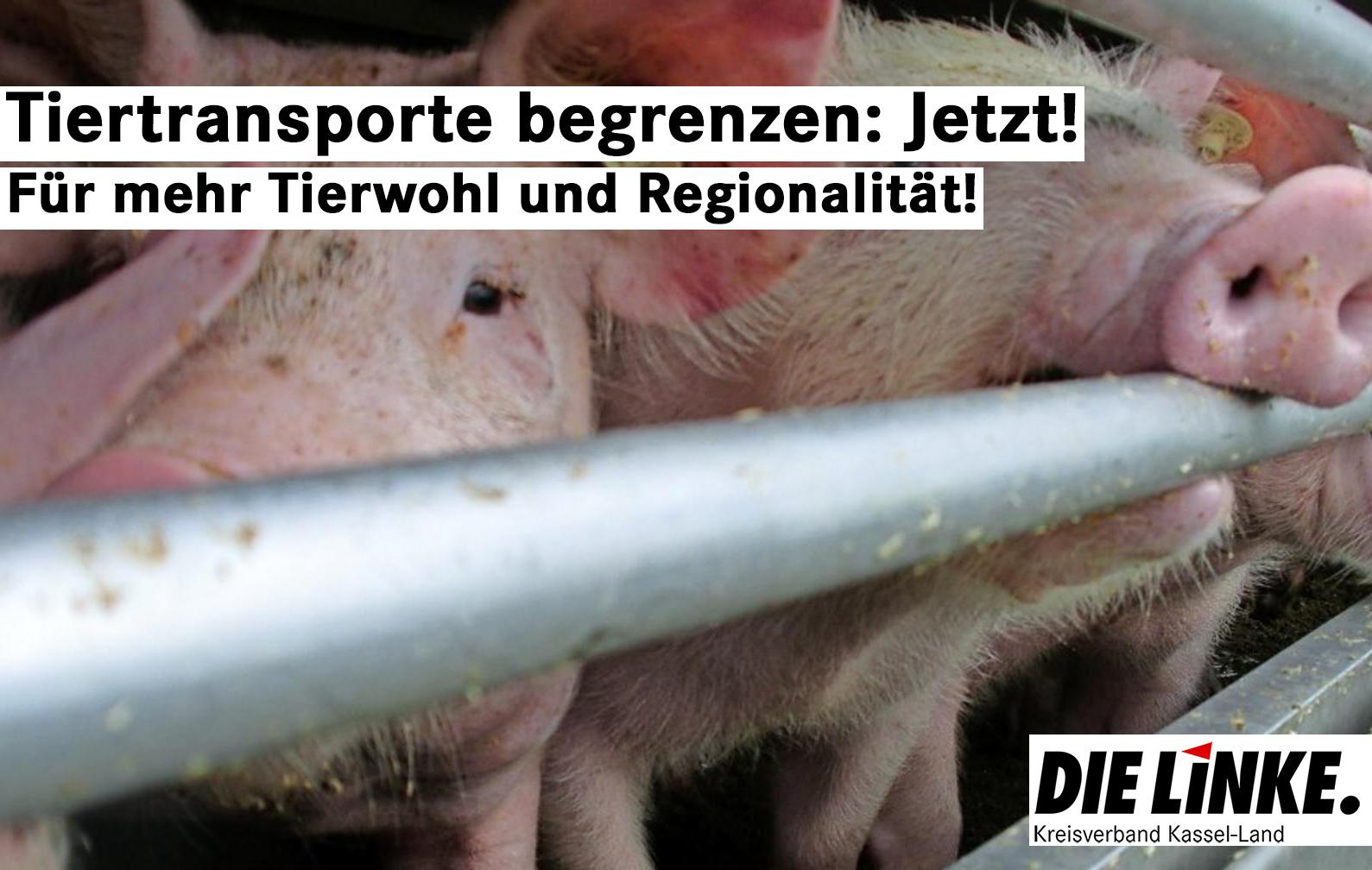 Tiertransporte begrenzen: Tierwohl und Regionalität fördern!
