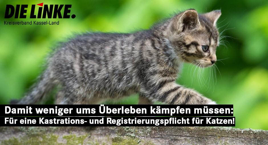 In hessischen Parks und Wäldern streunen Zehntausende Katzen am Rande der Städte