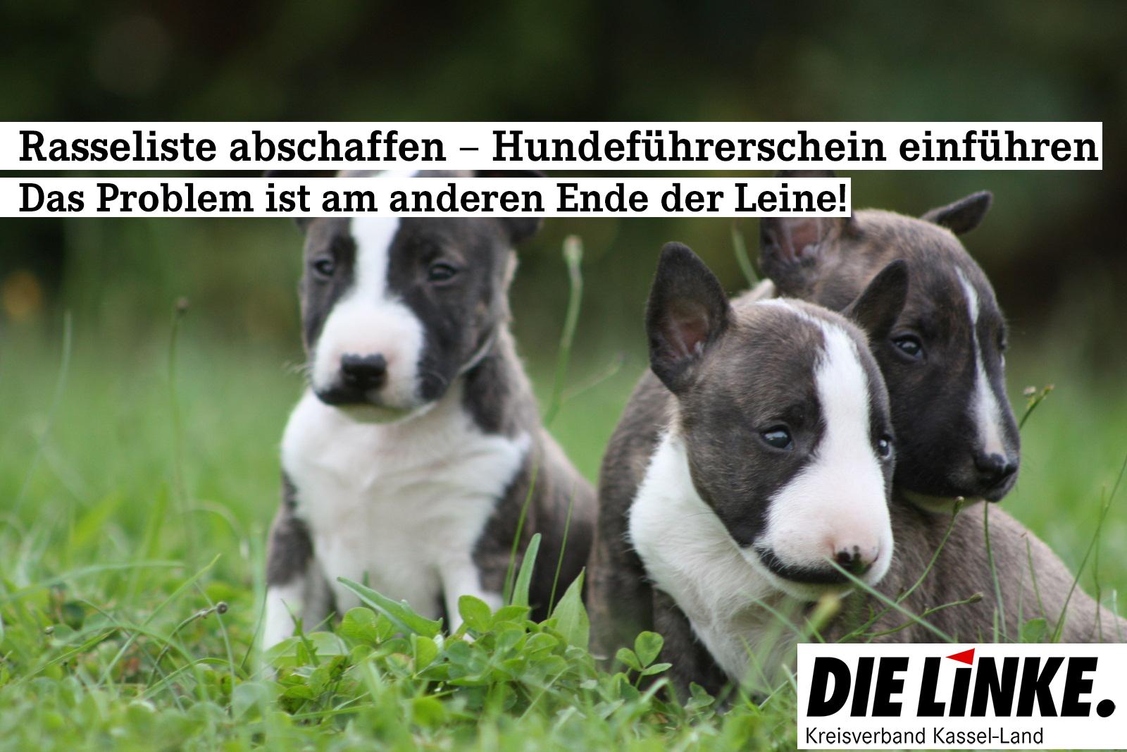 Wir sind für die Abschaffung der Rasseliste bei Hunden!